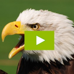 Video Teambuilding met Roofvogels